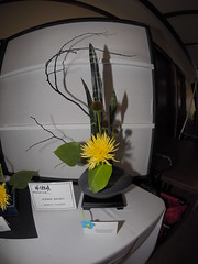 "Monstera Leaf, Coneflower Head, Snake Plant Leaves, Red Leaf Hawthorne and Chrysantheum Branch by Jennie Nagel ""Koryu School"" (nano.maus) Tags: fisheye lauritzengardens japaneseflowerarrangement omahabotanicalsociety japaneseambiencefestival"