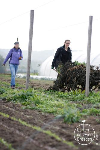 kompostieren_64