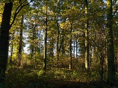 Knipprather Wald - November 2015 (KL57Foto) Tags: wood autumn trees pen germany deutschland am herbst natur olympus nrw wald rhein bume baum rheinland rhineland monheim 2015 herbstlich monheimamrhein epm2 stadtmonheim knipprather kl57foto stadtmonheimamrhein