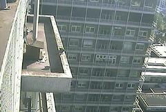 courtship display on the ledge