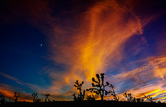 MIKE9153-PanoB (Michael William Thomas) Tags: park blue wedding sunset red sky panorama orange landscape photography buffalo photographer desert joshua joshuatree rochester national mojave mohave westernnewyork sunse mikethomas michaelthomas mtphoto michaelwthomas