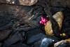 El Abandono 12 (Alejandro...) Tags: abandonado basura ensayo muñeco ushuaia