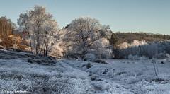 161230_006-139.jpg (Jacky Vastmans) Tags: limburg maasmechelen mechelseheide beriezen bevroren bos cold freezing frozen koud landscape landschap panorama sneeuw sneeuwlandschap snow snowy stilleven vriezen winter winterlandschap wood