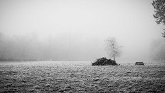 Le tas de bois (HellAir) Tags: frozen rambouillet parcduchâteauderambouillet december winter gelé mist fog bw noiretblanc hiver blackandwhite