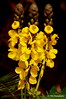 Flowers (Rollingstone1) Tags: yellowflowers flora plant nature outdoor natural organic flower