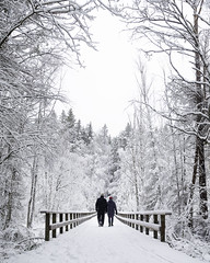 Welcome to Winter Wonderland (Markus Jansson) Tags: winter snow snowing cold snowfall snowflakes peaceful serene crisp weather bridge leadinglines nature highkey contrast trees snowcovered beautiful stockholm tyresta nationalpark isolated fairytale white