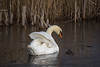 Swanlake on ice (No'Mi (on and off)) Tags: swan zwaan ijs ice riet reed winter reflection reflectie feathers veren nature natuur meertje water