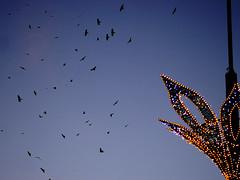 be free in 2017 !!!!!!! (Darek Drapala) Tags: freedom sky skyskape blue birds lumix light panasonic poland polska panasonicg5 warsaw warszawa space