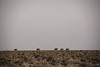 Line of Giants (carlos.aantunes) Tags: elephant namibia parade silhouette travel travelphotography giant line etosha national park amazing freedom africa tia simple horizon savana grass five natural landscape wildscape