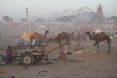The Camel Fair (Alex L'aventurier,) Tags: india pushkar desert camels fair inde rajasthan dust wheels atmosphere chameaux roues poussière mracé désert