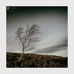 Blown II - The Sketches # 53 (Stuart Leche) Tags: bigstopper clouds eveninglight heather landscape longexposure nationalpark peakdistrict rocks sapling silverbirch sky stuartleche tree uk winter wwwstuartlechephotography