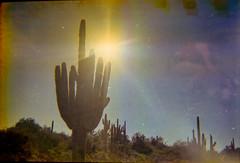 Lomography Konstruktor / Lomography 400 (K e v i n) Tags: lomographykonstruktor lomography400 35mm firstroll 1stroll film analog epsonv500 scan sonorandesert desert newriver blackcanyontrail arizona az saguaros cactus cacti nature outside sun sunshine