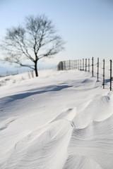 snow (HDH.Lucas) Tags: cannon snow winter lucas white tree 동형 양떼목장 눈 겨울 나무