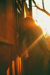 плёнкомания. (letit.klementina) Tags: canon 5d fullframe digital portrait people photography photo yellow green 50mm lens 18 natural light evening female hair girl woman street story spring sunbeam tree sun ukraine sumy sunset sunny shot beautiful outdoors color grain