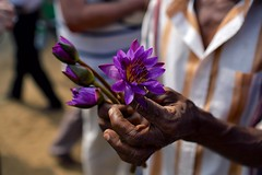 Lotus (alisdair jones) Tags: ef35mmf14lusm lotus flower offering buddhist jayasrimahabodhiya anuradhapura srilanka