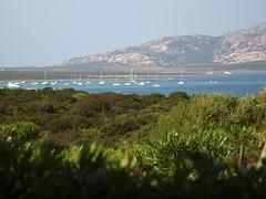 Da casa (Simone Onorati) Tags: sardegna sea boats mediterranean mare sardinia barche asinara macchiamediterranea