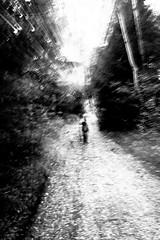 Wanderer (Jarod_81) Tags: moor wald weg waldweg birken jarod81 ainring