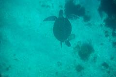 20150923-DSC_5349.jpg (d3_plus) Tags: sea sky fish beach japan scenery underwater diving snorkeling  shizuoka    apnea izu j4  waterproofcase    skindiving minamiizu       nikon1 hirizo  1030mm  nakagi 1  nikon1j4 1nikkorvr1030mmf3556pdzoom beachhirizo misakafishingport  1030mmpd nikonwpn3 wpn3