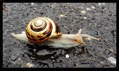 slow Mo (stansvisions) Tags: rain catchycolors outdoors flickr slow pavement shell snails antenna adifferentpointofview commonwealthofvirginia stansvisions