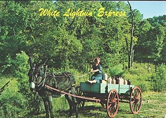 25 MkPeters (Rocky's Postcards) Tags: wagon still postcard humor donkey mule moonshine whitelightning mkpeters