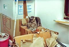 00576 (d_fust) Tags: cat kitten gato katze 猫 macska gatto fust kedi 貓 anak katt gatito kissa kätzchen gattino kucing 小貓 고양이 katje кот γάτα γατάκι แมว yavrusu 仔猫 का बिल्ली बच्चा