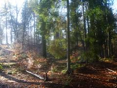 rozendaal (Nelis Zevensloot) Tags: autumn automne herbst herfst veluwezoom winterlandscape lhiver winterlandschap rosendael rozendaal
