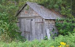 Perdu en fort. (donaldpoirier93@yahoo.fr) Tags: architecture fleurs pins paysage extrieur btiment grange fort bois verdure cabane cabanon cdre bardeau dsc2462 paysagedt