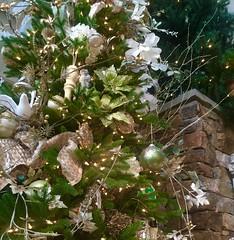 May Your Christmas Be Bright (EDWW day_dae (esteemedhelga)) Tags: santa christmas xmas holiday snow stockings st bells festive reindeer snowflakes snowman globe poinsettia illuminations garland holly scrooge nicholas elf wreath evergreen ornaments angels tinsel icicle manger yule santaclaus mistletoe nutcracker cheer jolly christmastrees happyholidays bethlehem merrychristmas bauble rejoice goodwill partridge elves yuletide caroling holidayseason carolers seasongreetings merrifieldgardencenter edww christchild daydae esteemedhelga jesus hohoho gingerbread wrappingpaper giftgiving joyeuxnoel northpole holidaydecornativity sleighride artificialtree candycane feliznavidadfrostythesnowman kriskringle sleighbells stockingstuffer wisemen twelvedaysofchristmas winterwonderland
