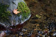 Murinan,--Kyoto (gasdust) Tags: kyoto sony    carlzeiss murinan a99  sal135f18za slta99v