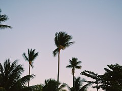 (Katie Dubois) Tags: texture nature toning tone nice colorful color favorite flickr outside vacation outdoor detail landscape photography nikond3100 d3100 morning night evening nikon green purple bright clear january winter summer 2016 2012 tropical hot sky republic dominicanrepublic trees palm palmtrees dominican