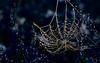 Capture glacée - Explore (31/12/2016) (david49100) Tags: 2016 maineetloire seichessurleloir araignée d5100 décembre nikon nikond5100 spider toile web
