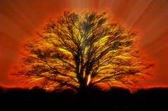 Fractalius (◄Laurent Moulin photographie►) Tags: fractalius arbre tree paysage landscape orange red rouge noir black rayons de soleil ray sun rays rayon sunset couche du colombier saugnieu ngc