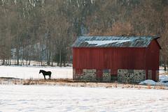 _DSC0060 (Fluff Tater) Tags: 31dec2016 winter farm barn horse rural red silhouette