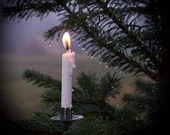 267 Candle (Helena Johansson 71) Tags: candle stearinljus fs161218 fotosondag outdoor christmas nikond5500 d5500 nikon project365 tree