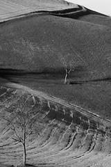 Contrastanti contrasti (gaddi_luca) Tags: rural collina hills sedignano grassano bianconero blackwhite contrasti luce ombra collinereggiane appenninoemiliano