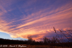 Sunset Clouds (dcstep) Tags: canon5dsr ef14mmf28lii aurora colorado unitedstates us f4a1759dxo cherrycreekstatepark allrightsreserved copyright2016davidcstephens dxoopticspro113 nature urban urbannature sanctuary sunset pinkclouds clouds pixelpeeper