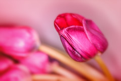 pink heart in red (frederic.gombert) Tags: pink red light sun sunlight flower flowers bunch plant garden macro nikon d810 color colors colored colorful winter spring interior