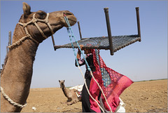 load, kutch (nevil zaveri (thank you for 10 million+ views :)) Tags: zaveri camel animals domestic people rabari nomad kutch kutchchhi gypsy roadside migration india kuchchh gujarat photography photographer images photos blog stockimages photograph photographs nevil nevilzaveri stock photo woman women vagadia quilt peopleatwork work bed packing lugguage weight