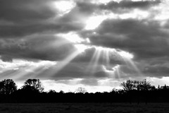 Jacob's Ladders (Peter Denton) Tags: england jacobsladder sunlight sunbeam meteorology bushypark teddington richmond greaterlondon royalpark landscape ©peterdenton canoneos100d nature middlesex middx monochrome bw blackandwhite