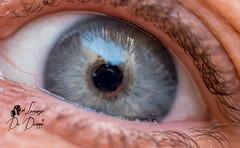 My mother' eye (lulo92) Tags: eye occhio macro macros macropahgy macrophoto sigma105 sigma nikon nikontop nikond5200