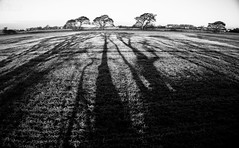 Reaching_Out (PJT.) Tags: shadow silhouette lydiate winter sown crop moss peat agricultural local trees liverpool lancashire long leading line
