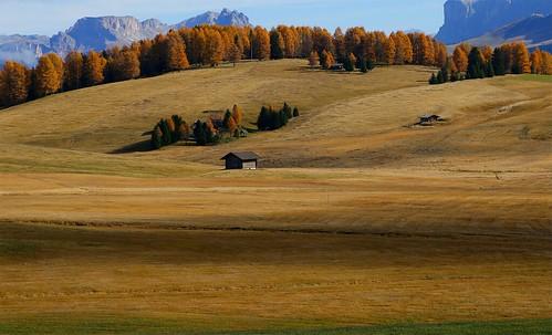 Alpe di Siusi autumn detail _MG_2084m(1)