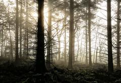 Wild Wood (PeskyMesky) Tags: aberdeen wood woodland tree mist scotland flickr