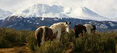 LAS BESTIAS PERDIDAS (Marina Balasini & Juan Montiel) Tags: turismo travel argentina caballo horse