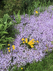 Bouquet of creeping phlox and dandelions with blades of grass and misc garden leaves. (Tim Kiser) Tags: 2013 20130511 annascrippswhitcombconservatory belleisle belleislepark belleisleconservatory detroit detroitconservatory img8394 may may2013 michigan phloxsubulata taraxacum waynecounty conservatory creepingphlox dandelions down flowergarden flowerbed flowers gardenflowers grass lightpurple lightpurpleflowers municipalconservatory phlox plantconservatory purpleandyellow purpleflowers southeastmichigan southeasternmichigan unitedstates