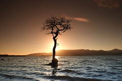 Milarrochy Tree at sunset