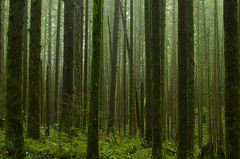 Another Day (Kristian Francke) Tags: forest tree trees landscape bc canada britishcolumbia nature natural green cedar western hemlock outdoors pentax