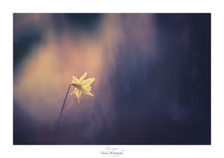 La mélancolie efface le  Narcisse-ssisme