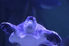Океанариум Крокус Сити (БатинБлог) Tags: океанариум крокус сити москва