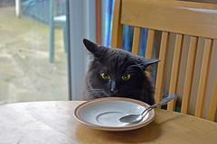 - So, did Mot'ka eat all the soured cream?! (Caulker) Tags: vaska 12032017
